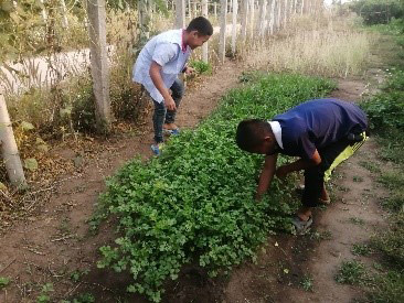 GfC Photo 1: Migrant children in Fang tend their organic garden. (Photo: Group for Children)